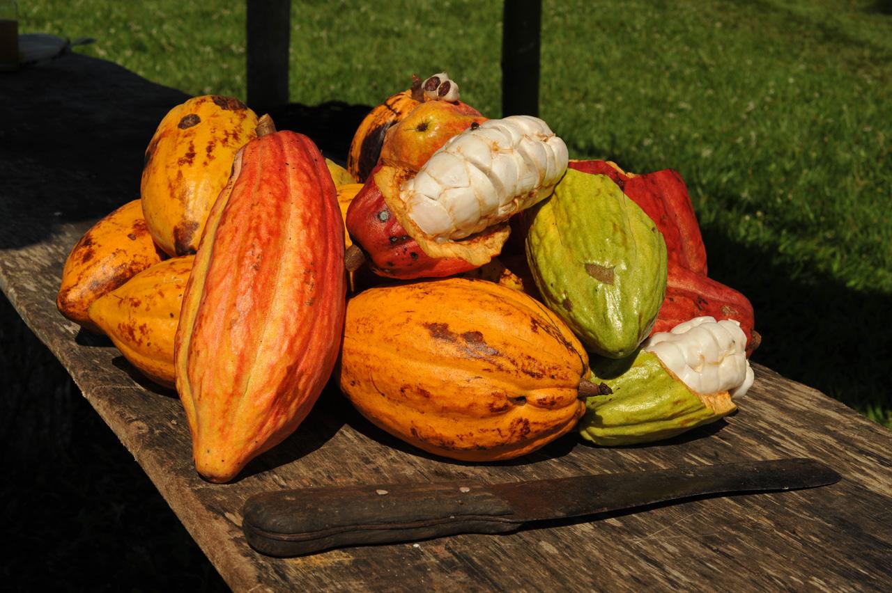 Costa do Cacau é uma região de extraordinária beleza cênica