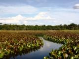 Pantanal Baiano