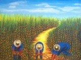 Uma plantação de cana-de-açúcar