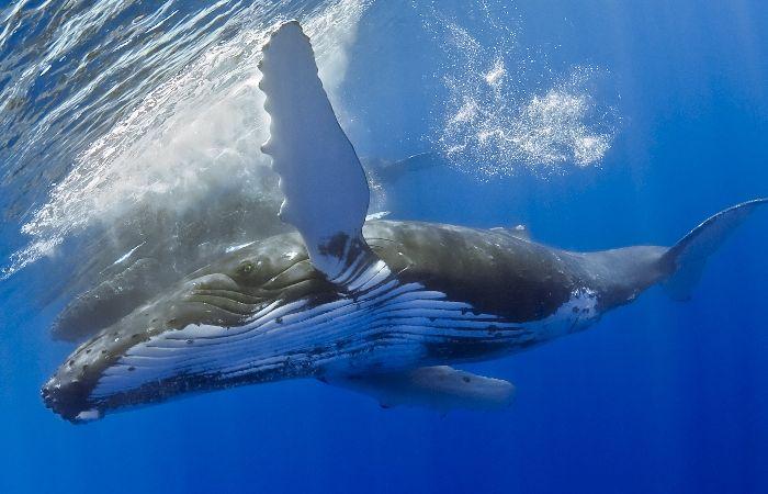 Guia de Turismo e Viagem da Costa das Baleias